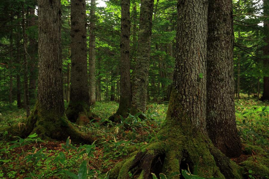 光の森 | 前田一歩園財団